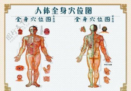 人体穴位图图片