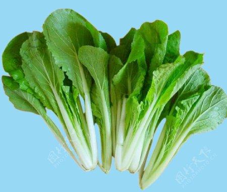 小白菜图片