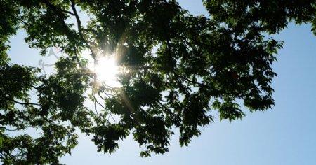 刺眼的阳光图片