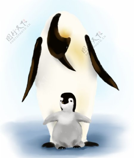 企鹅母子插画图片