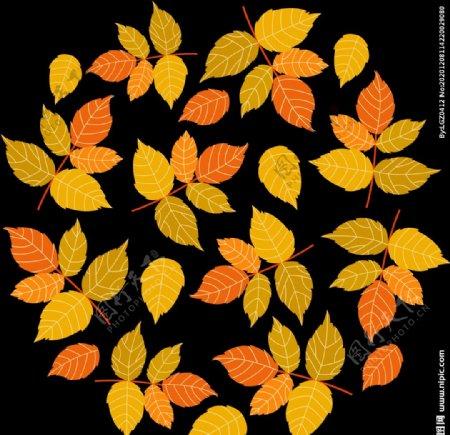 树叶叶子图片