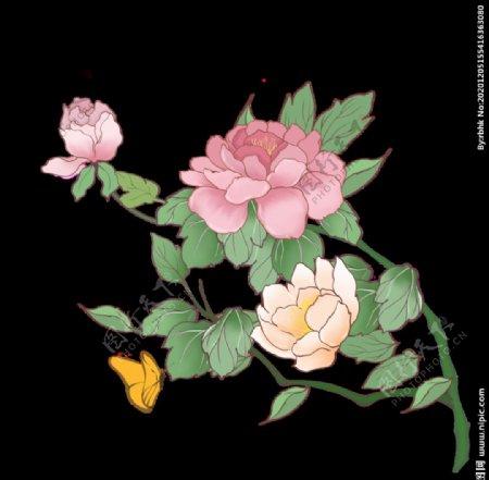 牡丹花插画素材图片