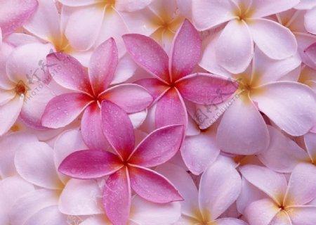 粉色花瓣小花浅粉色装饰花图片