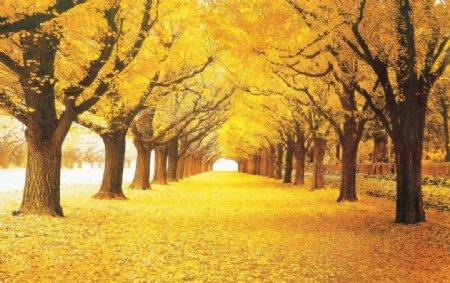 枫树林图片