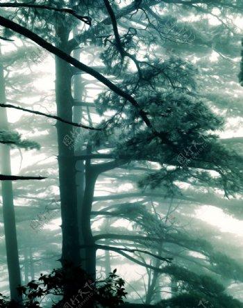 松树风景油画图片