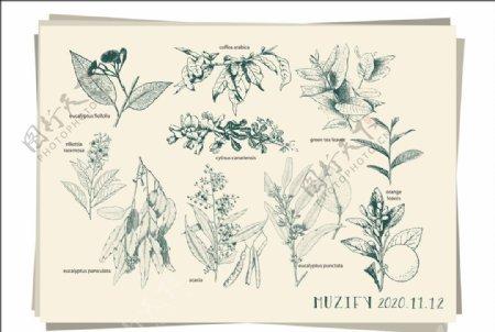 10款入植物素描画图片