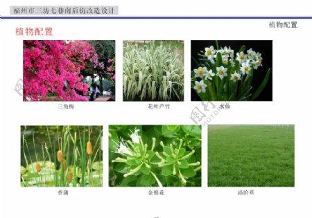 植物花朵图片