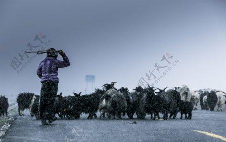 孤独的牧羊人图片