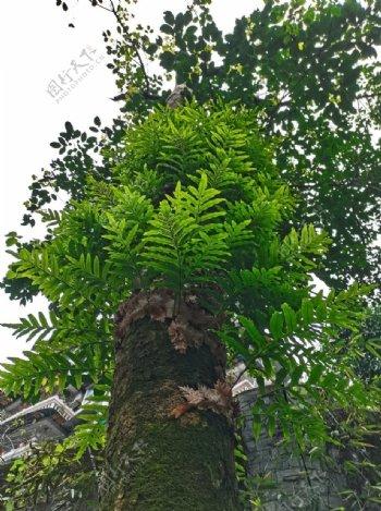 树叶树木图片