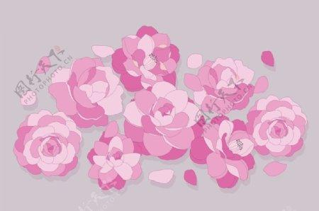 粉红花鲜花图片