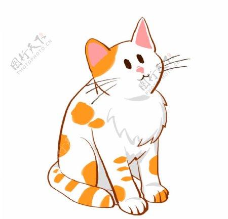 呆萌橘白相间猫咪图片