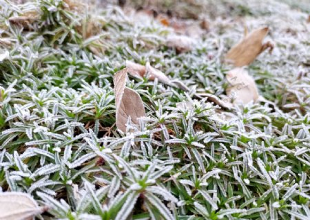 清晨秋霜打的草地图片