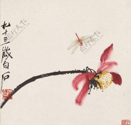 齐白石国画荷花蜻蜓图图片