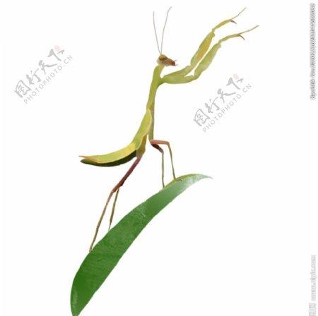 创意卡通手绘昆虫虫子螳螂元素图片