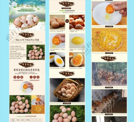 散养土鸡蛋详情页图片