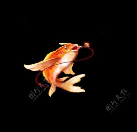 锦鲤吃饵图片