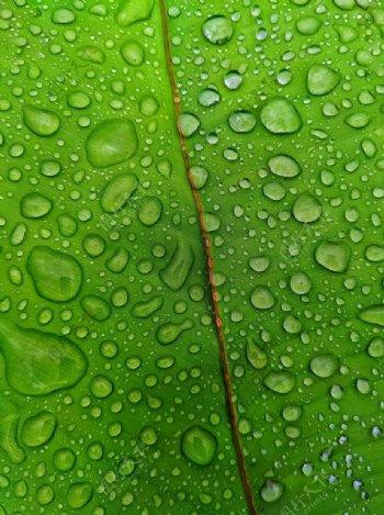 水滴绿叶图片
